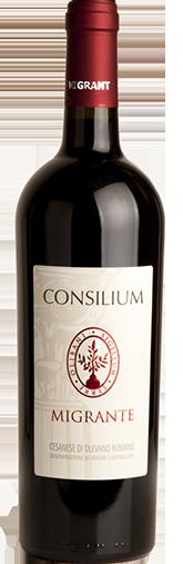 Consilium 2015