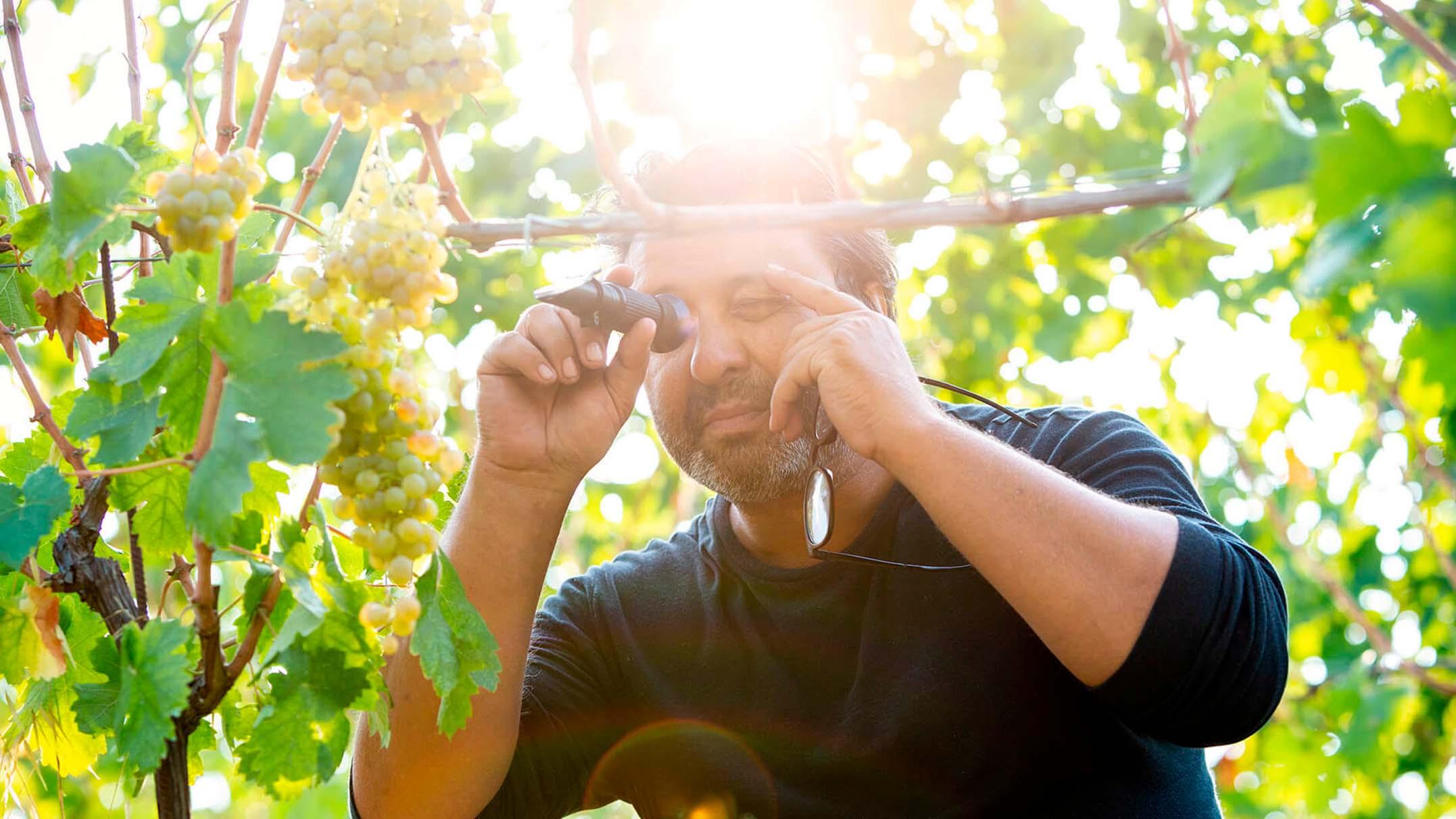 farmer-looking-at-grapes